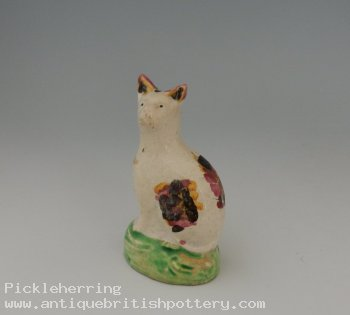 Stunning Polychrome Cat